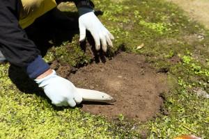 苔をはがすと敷石が現れる
