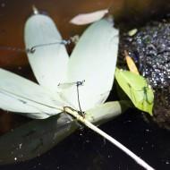 イトトンボをはじめたくさんの生きものが生息
